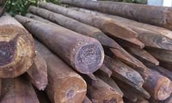 Poteaux en bois rond créosoté (brun)